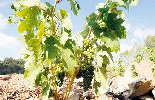 El Baix Llobregat exporta a Francia su modelo de parque agrario