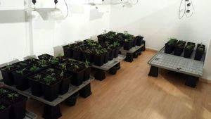 La Guàrdia Urbana de L'Hospitalet troba una plantación de marihuana dins d'un local comercial