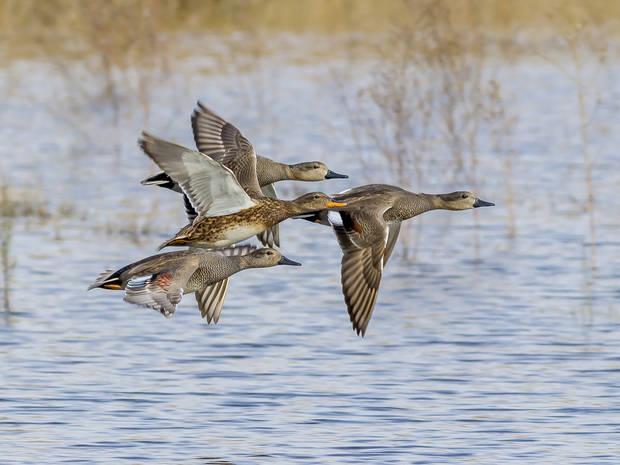 El Delta del Llobregat, entre los espacios naturales con más diversidad de pájaros de Europa