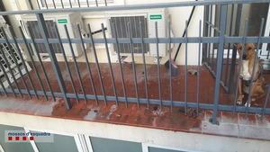 Rescatan a una perra abandonada en un balcón en Esplugues