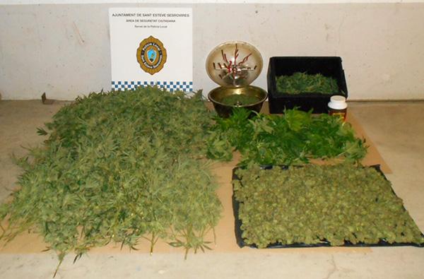 Marihuana decomisada por la Policóa Local de Sant Esteve Sesrovires.