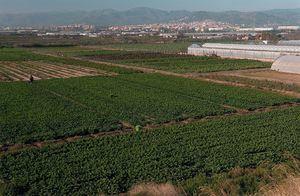 El espacio protegido del Parc Agrari del Baix Llobregat.