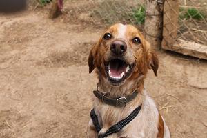Cinco mascotas abandonadas al día en el Baix Llobregat