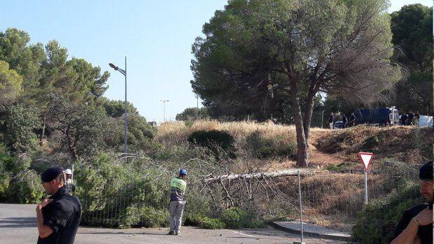 Algunos árboles del pinar ya han sido talados.
