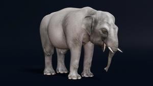 Representación digital de la cría de elefante de la exposición