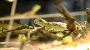 Reptiles, peces y otros pequeños mamíferos invadirán La Farga de l'Hospitalet este sábado