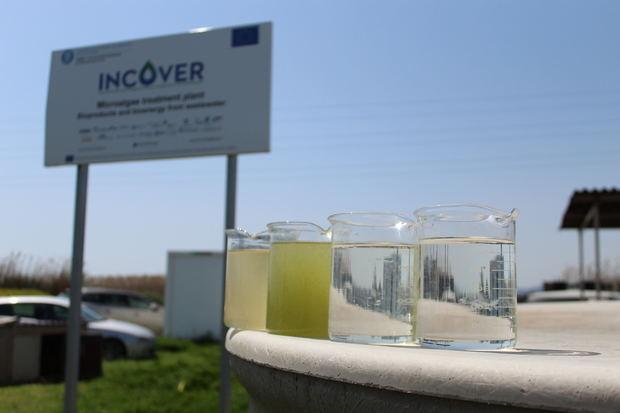 De izquierda a derecha: muestras de agua del canal de riego (con las que se alimenta a als algas), agua de los fotobioreactores, agua salida del decantador y agua después de la planta de filtración (pre-potable).