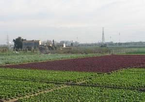 Agricultura sembra la incertesa sobre l'origen de la pudor a la zona metropolitana
