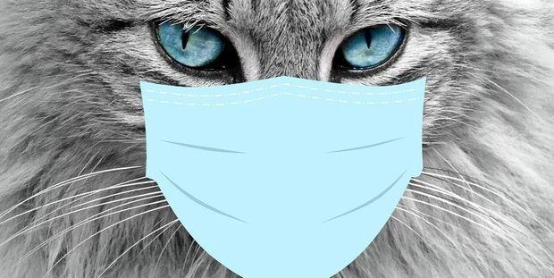 L'Hospitalet controla los gatos callejeros para que sobrevivan al estado de alarma