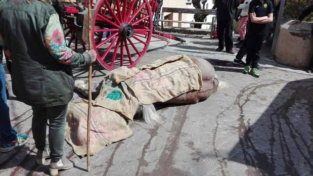 Dues persones ferides i la mort d'un dels cavalls obliga a suspendre els Tres Tombs de Torrelles