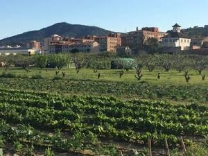 Sant Vicenç, horts del Llobregat
