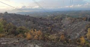 Castellví de Rosanes inicia una actuación urgente de retirada de árboles quemados en riesgo de caer