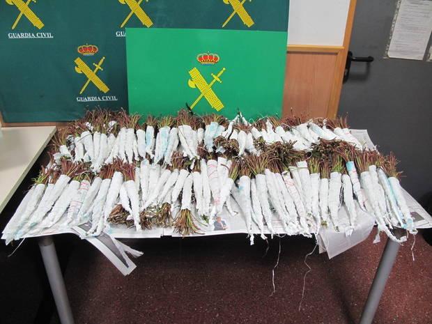 La Guardia Civil interviene, en el Aeropuerto de El Prat, 71 kilos de Khat, la droga blanda del cuerno de África