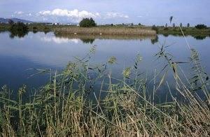 El Delta del Llobregat, entre los 26 humedales españoles gravemente amenazados
