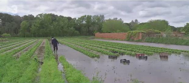 El fuerte temporal de los últimos días arrasa los cultivos del Parc Agrari del Baix Llobregat