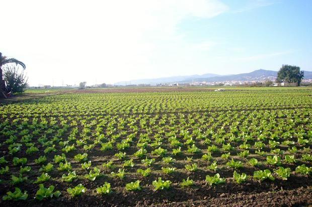 El Parc Agrari, epicentro agrícola de la metrópolis.