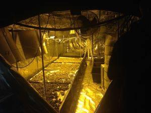 Una operación policial desmantela una plantación de marihuana en L'Hospitalet