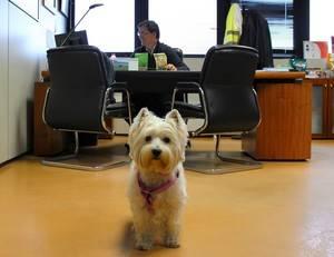 Nestlé Purina invita a las empresas a que permitan a sus trabajadores acudir con mascotas