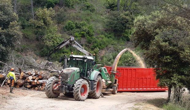 Can Colomer avanza para convertirse en un productor de biomasa
