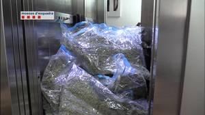 Mossos desmantella una organització criminal que introduïa marihuana a les associacions cannàbiques de l'àrea metropolitana de Barcelona