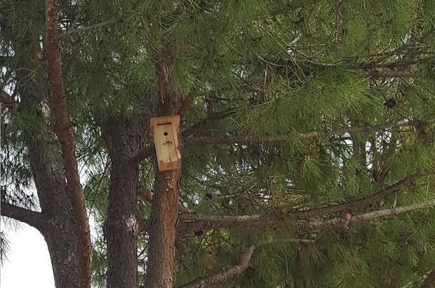 Viladecans instala 70 cajas nido para pájaros en sus parques que renaturalizarán la ciudad