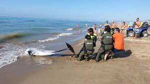 El temporal marítimo arrastra a un delfín muerto hasta la playa de Gavà