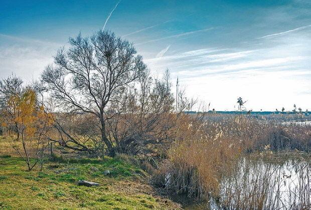 El Delta se niega a ser el hermano pobre de los espacios naturales de Cataluña
