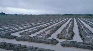 Inundaciones, la gran pesadilla de los campos agrícolas del Baix Llobregat