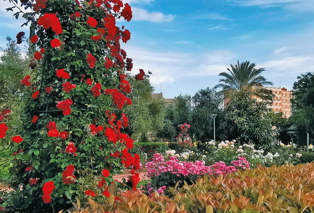 Sudor solidario para las rosas de Sant Feliu y el patrimonio de la Vall del Llor