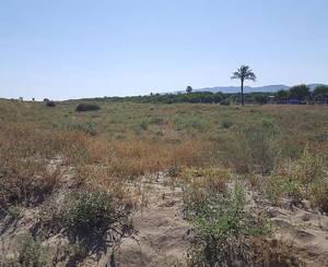 Playa de El Prat: una joya en peligro de extinción
