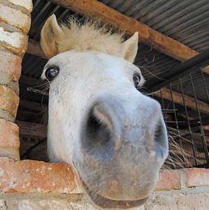 A lomos de un caballo en el Baix Llobregat