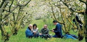 Hacer de samurái entre cerezos