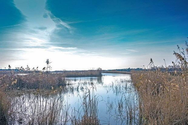 La protección del espacio natural del Delta del Llobregat sigue pendiente del plan director