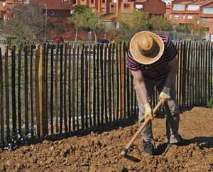 L' horticultura de ciutat posa la llavor a l'accent social