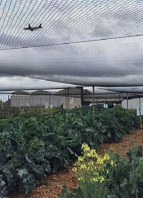 L'Internet de les Coses, l'eina per guanyar competitivitat al sector agroalimentari
