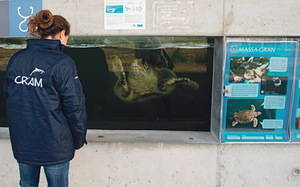 El CRAM, ubicado en El Prat, permite apadrinar una tortuga para proteger el medio marino
