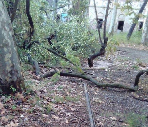Los ladrones han contardo algunos árboles para poder llevarse algunos materiales.
