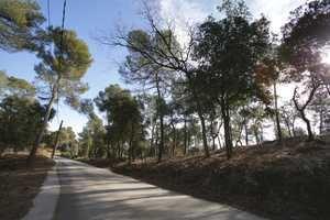 Molins de Rei dota a Vallpineda de una franja de protección contra incendios forestales