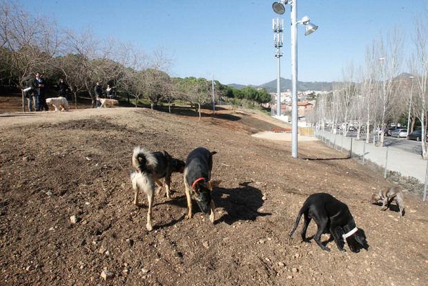 Sant Boi premiará con vales comerciales las buenas conductas de los dueños de perros