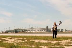 Los halcones más famosos del Baix cumplen 20 años de servicio