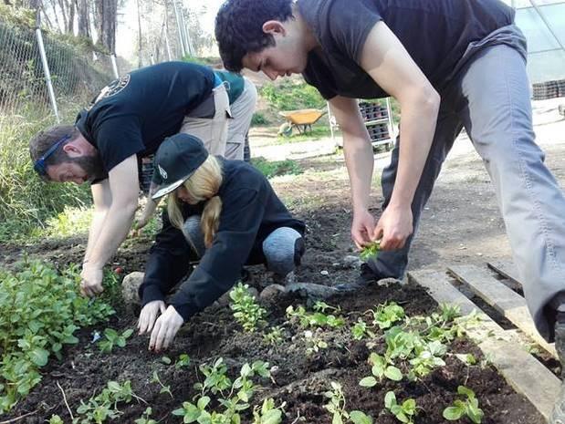 Una veintena de jóvenes de Sant Andreu de la Barca empiezan a formarse como agricultores en los huertos municipales