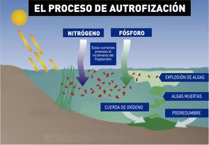 Ilustración facilitada por el consistorio que explica el fenómeno de la eutrofización.