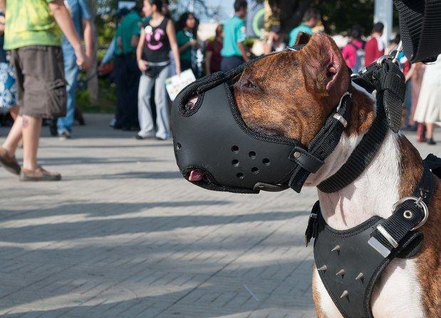 Viladecans aprueba incrementar el control a los 'perros peligrosos'