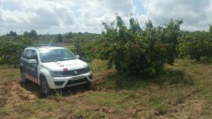 Más vigilancia policial en el Baix Nord por el inicio de la campaña de recogida de la fruta
