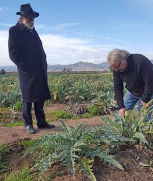 La alcachofa de El Prat podría entrar en el 'Arca del Gusto' del impulsor del 'Slow Food', Carlo Petrini