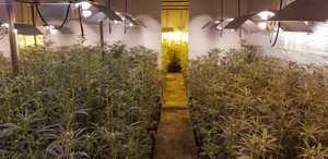 Dos detenidos por un macrocultivo de marihuana en una nave de Esparreguera