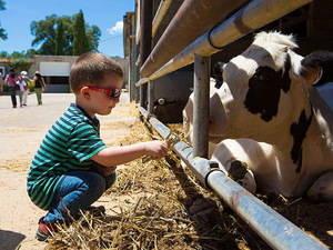 La pagesia de Catalunya celebra la segona edició de Benvinguts a Pagès