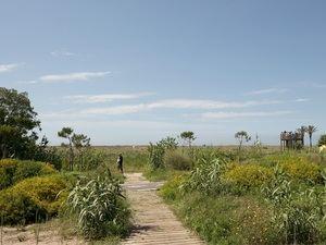 Dunas junto al paseo marítimo de El Prat.