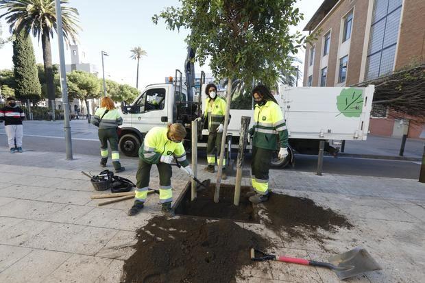 L'Hospitalet plantará más de 900 árboles para reducir la emisión de CO2 y la contaminación