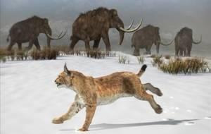 Un fòssil de linx ibèric trobat a Vallirana avança en 500.000 anys l'aparició de l'espècie a la península ibèrica